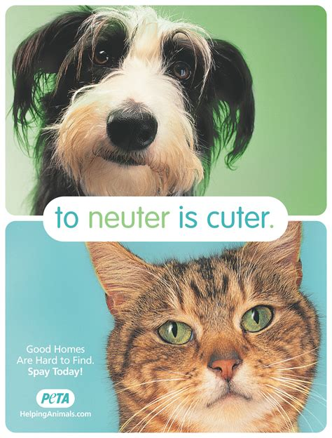neutering an today is spay day usa houston pettalk