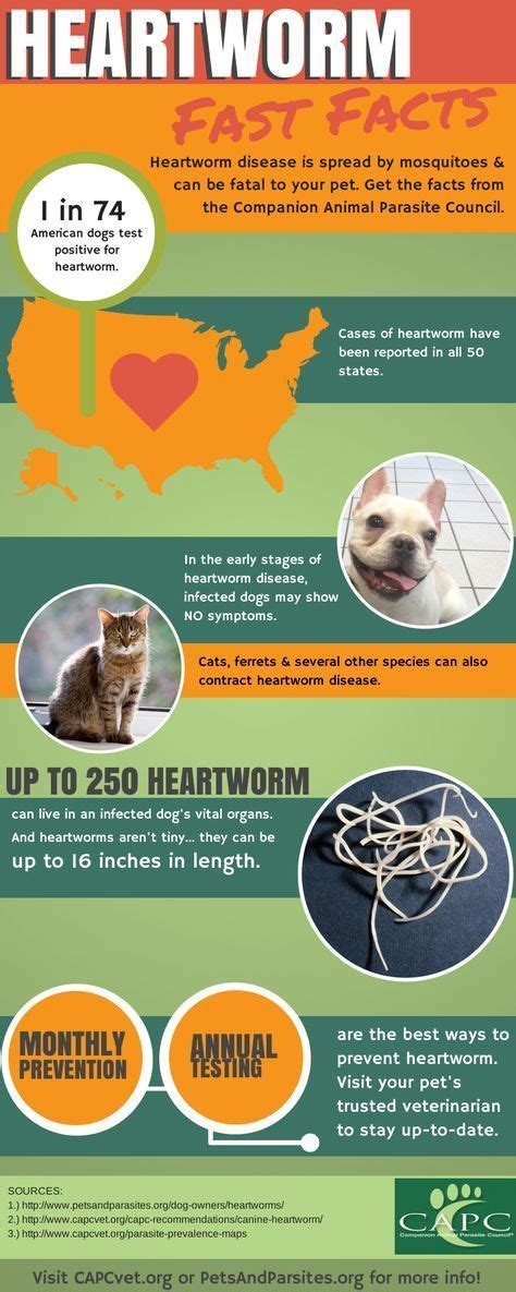 heartworm pills 123 best images about heartworm on cats for dogs and pills