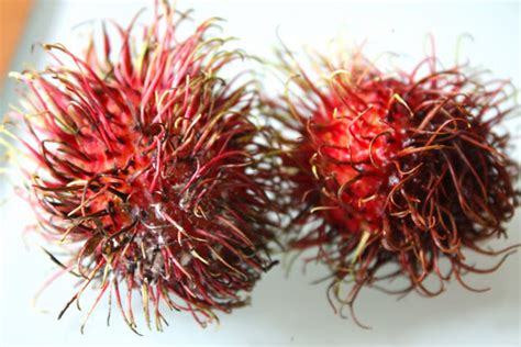fruit with spikes whats this fruit all about i want to but how what