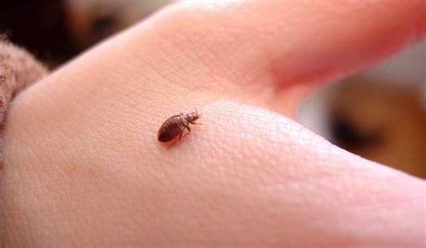 treat bed bug bites naturally bloglino