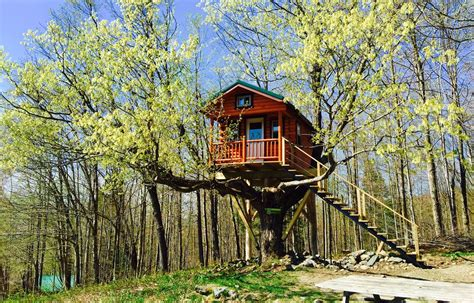 build  treehouse diy tips cost guide contractorculture
