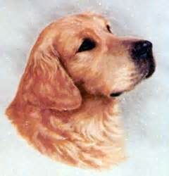 camrose golden retrievers camrose golden retrievers home page