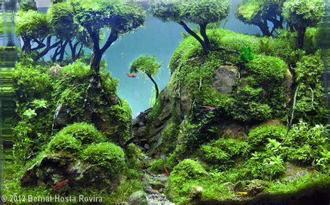 aquascape contest pin by tito garcia on awesome aquascapes pinterest
