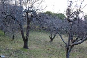 moving fruit trees how to move fruit and nut trees and build a community