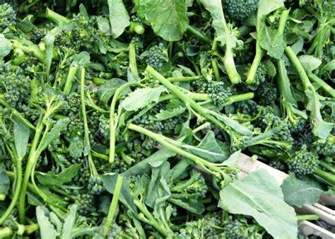 come cucinare i broccoletti di bruxelles broccoletti caratteristiche e ricette la rubrica di