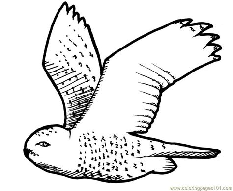 printable flying owl coloring pages coloring pages flying owl birds gt owl free printable
