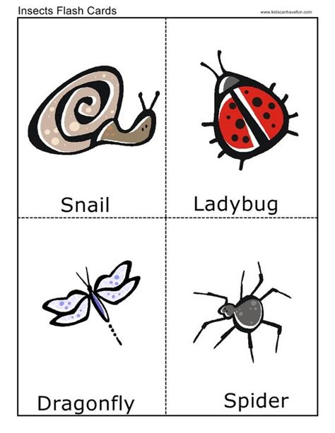 printable insect flash cards insect flashcards flashcards pinterest insects