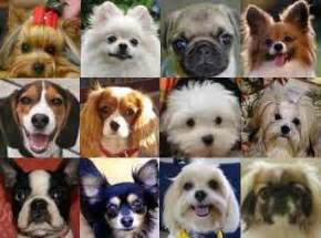 Small House Dogs Pics Photos Dog Breeds Small Sized Dog Breeds Top 20 Dog