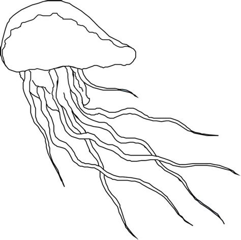 box jellyfish coloring pages free box jellyfish coloring pages