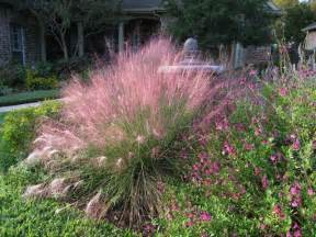gulf muhly muhly grass florida muhly grass gulf