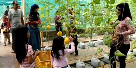 Bibit Buah Di Mekarsari tempat wisata di bogor hargatiketmasuk