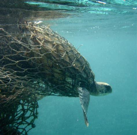 los animales marinos al animales marinos en peligro de extinci 243 n