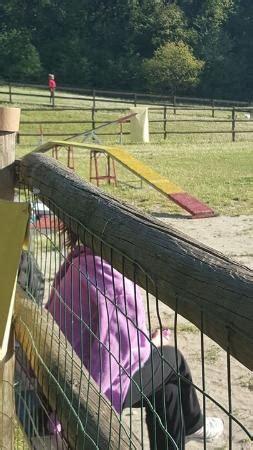 agriturismo casteggio pavia coniglietti foto di agriturismo il biancospino