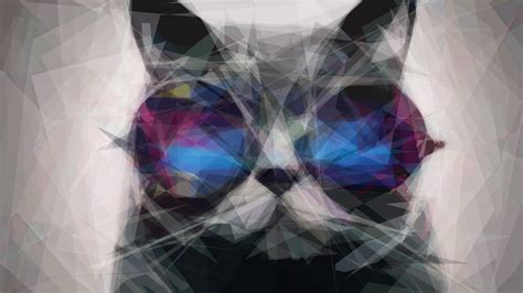 wallpaper cat 3d glasses cat in the glasses hd wallpaper 187 fullhdwpp full hd