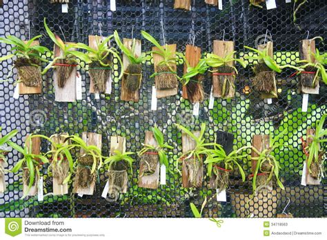 Interior Design Web App small orchids hang on net stock photos image 34718563