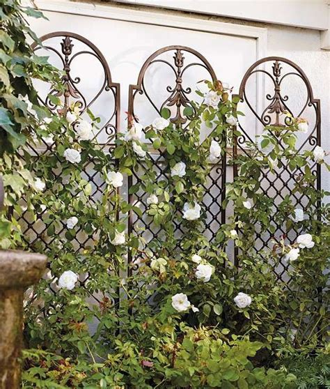 Trellis Metal Best 25 Metal Trellis Ideas On