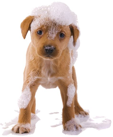 puppy wash 4 paws mobile spa mobile cat groomer surrey west sussex