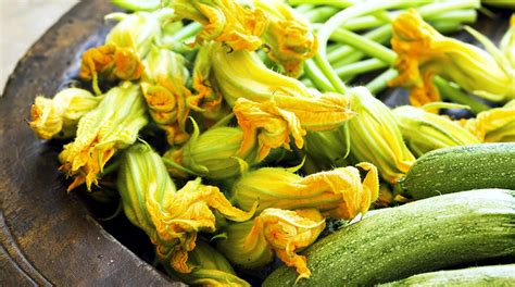 fiori di zucca ricette light fiori di zucca gratinati la ricetta light e le varianti