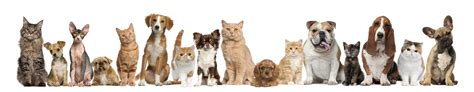 dog house thorndale pa critter care veterinary hospital in thorndale