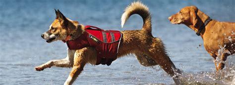 zwemvest bulldog hond en water let op veiligheid dierenkliniek de tweesprong
