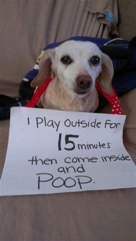 my dog started peeing and pooping in the house again 17 best images about dog and cat shaming on pinterest pets dog