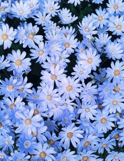 wallpaper flower tumblr blue flowers tumblr wallpaper image 2194637 by ksenia l on