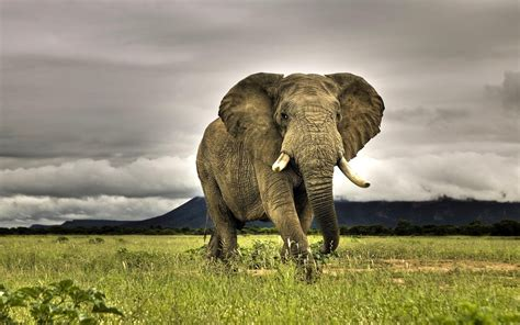 cool elephant wallpaper hd elephants wallpapers and photos hd animals wallpapers