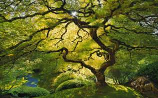 Canopy Leaves by Tree Leaf Canopy Jpg 1920 215 1200 Trees Pinterest