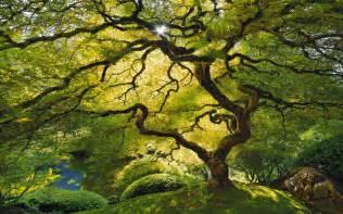 Whats A Canopy Tree Leaf Canopy Jpg 1920 215 1200 Trees