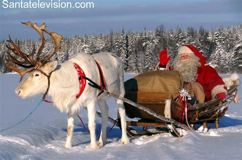 imagenes de santa claus con los renos p 232 re no 235 l entr 226 inant son renne dans la montagne en laponie