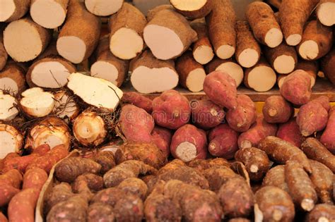 carbohydrates yams yam variety stock photo image of agriculture