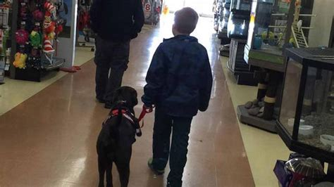 diabetic service dogs cost diabetic boy saves pennies for 4 years finally gets beloved service news
