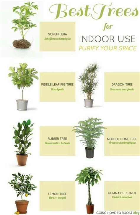 cuidado de plantas de interior 39 mejores im 225 genes sobre plantas en plantas