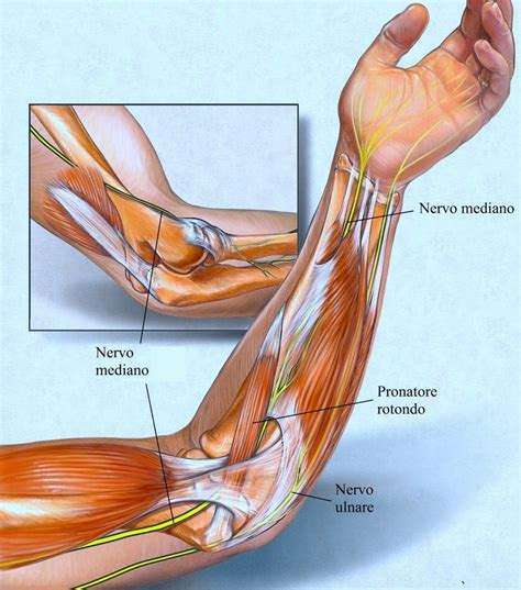 dolore interno al braccio sinistro tricipite bicipite e muscoli braccio