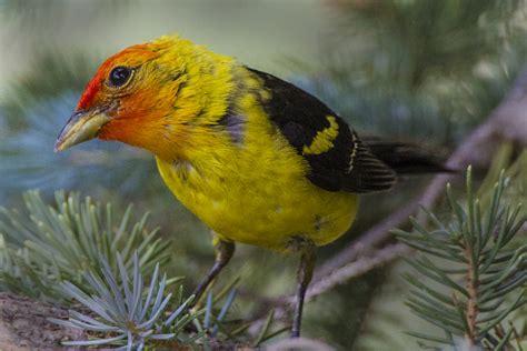 Celebrate International Migratory Bird Day On Saturday