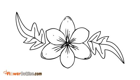 coloring pages of dogwood flowers dogwood outline related keywords suggestions dogwood