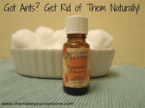 getting rid of ants in the house 5 natural ways to get rid of ants in the house