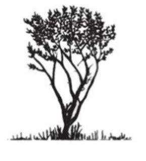 Handsock Bolbal Putih Pucat X Jingga Tua mangrove avicenn marina forsk vierh