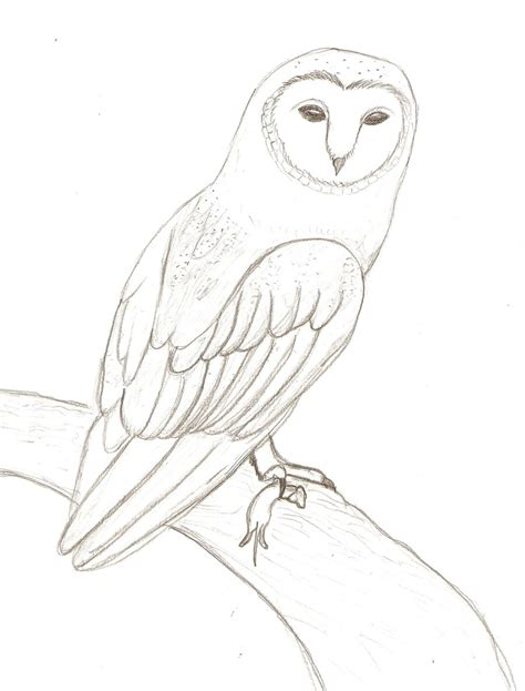 coloring page barn owl barn owl with mouse by natefana98 coloring page barn owl