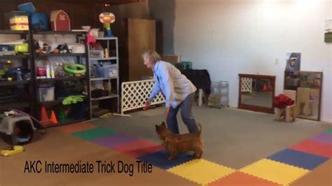 akc trick title akc trick titles funnydog tv