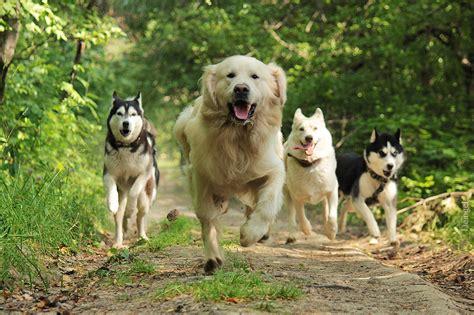 Dogs On by Team By Deingel Stock On Deviantart