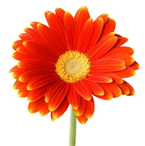 imagenes flores jpg flor jcgellibert mi web