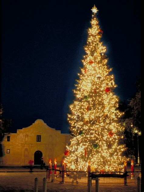 christmas trees for sale in san antonio tx trees in san antonio lights decoration