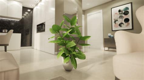 ficus interior ficus elastica interior plant flyingarchitecture
