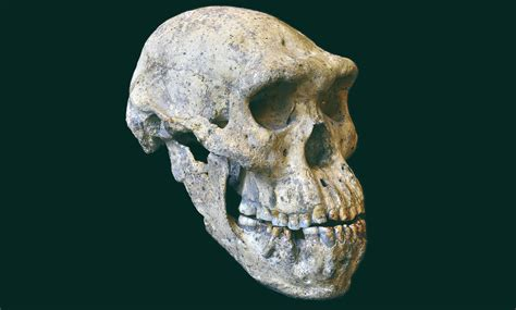 Dmanisi Human Skull From Georgia Implies All Early Homo Skull On