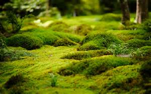 moss garden a magical backyard pinterest