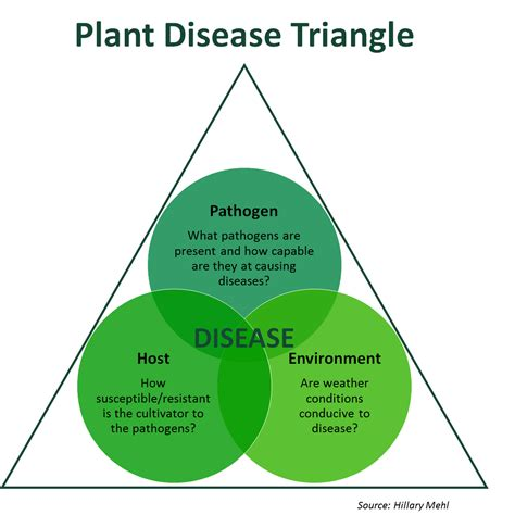 plant disease impact factor there s a fungus among us farms