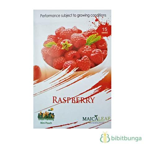 Benih Buah Raspberry Hitam Murah benih maica leaf raspberry merah 15 biji jual tanaman hias
