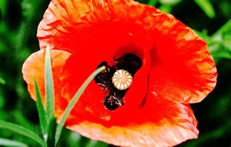 Garten Blumen by Gartenblumen Jamgo Co