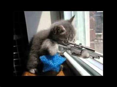 imagenes y videos graciosos fotos de gatos graciosos youtube